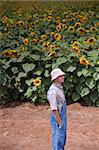 farmer standing in front of a sunflower field Stock Photo - Royalty-Free, Artist: Noam                          , Code: 400-04565183