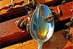 A bee chooses honey from a spoon. He is used as the feed for strengthening of health, increase of tone of organism; treatment of many diseases (heart; nervous system; muliebrias; gastric and duodenum ulcers; bronchial tubes and lights, eyes, skinning diseases). Promotes masculine potency. Stock Photo - Royalty-Free, Artist: Doctor2                       , Code: 400-04568186