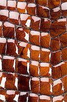snake skin - Snakeskin texture - leather background Stock Photo - Royalty-Free, Artist: JanPietruszka, Code: 400-04569737