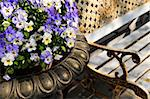 Planter with purple viola pansies and bench Stock Photo - Royalty-Free, Artist: Elenathewise                  , Code: 400-04587219