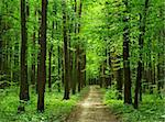 path is in the green forest Stock Photo - Royalty-Free, Artist: Pakhnyushchyy                 , Code: 400-04593510