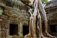 Ficus Strangulosa tree growing over a doorway in the ancient ruins of Ta Prohm at the Angkor Wat site in Cambodia Stock Photo - Royalty-Freenull, Code: 400-04619497