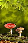 fly mushroom Amanita muscaria colors of autumn Stock Photo - Royalty-Free, Artist: kikkerdirk                    , Code: 400-04650238