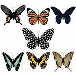 butterfly Stock Photo - Royalty-Free, Artist: james2000                     , Code: 400-04659768
