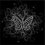 butterfly Stock Photo - Royalty-Free, Artist: james2000                     , Code: 400-04659769