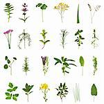 Large medicinal and culinary herb flower and leaf selection isolated over white background. Stock Photo - Royalty-Free, Artist: marilyna                      , Code: 400-04664121