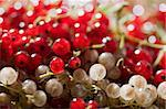 food series: macro picture of red and white currants Stock Photo - Royalty-Free, Artist: agg                           , Code: 400-04665815