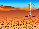 Drought landscape with dead tree Stock Photo - Royalty-Free, Artist: sahua                         , Code: 400-04679675