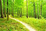 a path is in the green forest Stock Photo - Royalty-Free, Artist: Pakhnyushchyy                 , Code: 400-04687088