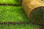 Green turf grass roll and background - closeup Stock Photo - Royalty-Free, Artist: lightkeeper                   , Code: 400-04690517