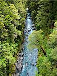 Top view at a  stream in rain forest at New Zealand Stock Photo - Royalty-Free, Artist: naumoid                       , Code: 400-04695939