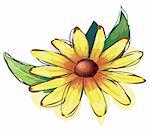 illustration drawing of yellow daisy flower isolate in a white background