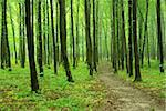 a path is in the green forest Stock Photo - Royalty-Free, Artist: Pakhnyushchyy                 , Code: 400-04697753