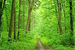 a path is in the green forest Stock Photo - Royalty-Free, Artist: Pakhnyushchyy                 , Code: 400-04697757