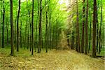 a path is in the green forest Stock Photo - Royalty-Free, Artist: Pakhnyushchyy                 , Code: 400-04698245