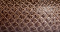 snake skin - Close-up of scale of snake Stock Photo - Royalty-Freenull, Code: 400-04701487