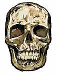 hand painted skull Stock Photo - Royalty-Free, Artist: drizzd                        , Code: 400-04713214