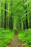 a path is in the green forest Stock Photo - Royalty-Free, Artist: Pakhnyushchyy                 , Code: 400-04728085