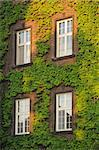 Windows on a wall covered with grapes vine, vertical photo Stock Photo - Royalty-Free, Artist: rorem                         , Code: 400-04728827
