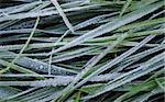 Background of green grass with hoarfrost on it. Stock Photo - Royalty-Free, Artist: KatSov                        , Code: 400-04733112