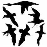 vector silhouette flying birds on white background Stock Photo - Royalty-Free, Artist: basel101658                   , Code: 400-04734988