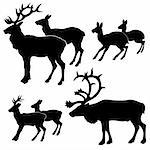 vector silhouette of the deers on white background Stock Photo - Royalty-Free, Artist: basel101658                   , Code: 400-04735937