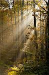 sunbeams filtered through leaves Stock Photo - Royalty-Free, Artist: kre_geg                       , Code: 400-04749420