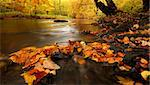 autumn by a river running through a forest Stock Photo - Royalty-Free, Artist: ckkeller                      , Code: 400-04750144