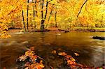 autumn by a river running through a forest Stock Photo - Royalty-Free, Artist: ckkeller                      , Code: 400-04750145