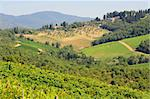 Hill Of Tuscany With Vineyard In The Chianti Region Stock Photo - Royalty-Free, Artist: gkuna                         , Code: 400-04759760