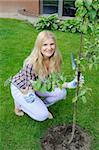 Pretty gardener woman with gardening tools outdoors planting apple tree Stock Photo - Royalty-Free, Artist: smartfoto                     , Code: 400-04768755