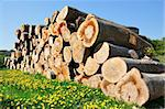 woodpile waiting for transport, which is used for a power station's heating. Stock Photo - Royalty-Free, Artist: levifoto                      , Code: 400-04771397