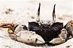 Crab on the beach. Koh Lanta, Thailand. Stock Photo - Royalty-Free, Artist: magicinfoto                   , Code: 400-04786061