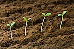 Green seedling illustrating concept of new life Stock Photo - Royalty-Free, Artist: ElnurCrestock                 , Code: 400-04786149