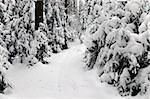snowy forest pathway Byelorussian landscape view Belarus olimpic center Raubichi Stock Photo - Royalty-Free, Artist: mrVitkin                      , Code: 400-04788809