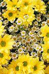 yellow and white flowers as very nice natural background Stock Photo - Royalty-Free, Artist: jonnysek                      , Code: 400-04790814