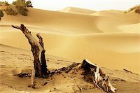 Landscape of dead trees and sandhills of deserts Stock Photo - Royalty-Freenull, Code: 400-04797095
