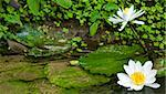 Lotus in the pond,thai temple  In Thailand Stock Photo - Royalty-Free, Artist: kuponjabah                    , Code: 400-04804996