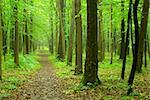a path is in the green forest Stock Photo - Royalty-Free, Artist: Pakhnyushchyy                 , Code: 400-04805204