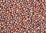 Indian spice seeds of black mustard, background for any use Stock Photo - Royalty-Free, Artist: Supertrooper                  , Code: 400-04806148