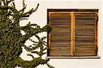 ancient wooden window and climbing green plant Stock Photo - Royalty-Free, Artist: victoroancea                  , Code: 400-04806723