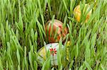 Easter eggs hidden in the green grass Stock Photo - Royalty-Free, Artist: aguirre_mar                   , Code: 400-04812964