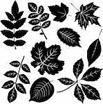 Leaves Stock Photo - Royalty-Free, Artist: albumkoretsky                 , Code: 400-04814943