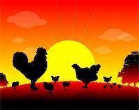farm animals, Herd of Hens, cock, chickens on nature background, sun, tree, bird Stock Photo - Royalty-Freenull, Code: 400-04820583