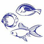 Tropical Fish. Set #4. Vector illustration on white background for design