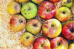 Close up of apples in hay Stock Photo - Premium Royalty-Free, Artist: Pierre Tremblay, Code: 649-04827544