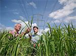 Farmers examining biomass fuel crop
