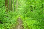 a path is in the green forest Stock Photo - Royalty-Free, Artist: Pakhnyushchyy                 , Code: 400-04846117