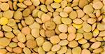 Photo of Lentils seeds closeup extreme macro Stock Photo - Royalty-Free, Artist: lindom                        , Code: 400-04847393