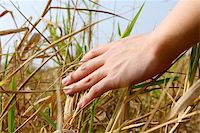 close up of a man's hand touching the grass, 'feeling nature Stock Photo - Royalty-Freenull, Code: 400-04857248